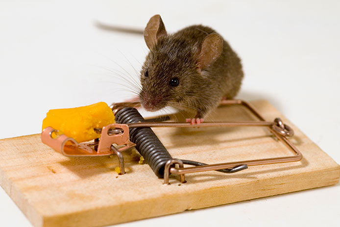 Mouse Trap with cheese and mouse