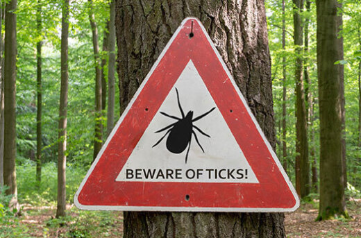 How to Naturally Control Ticks